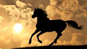 Horse-Shadow-300x168