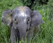 apology_elephants