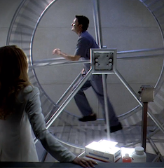 steve-on-the-hamster-wheel
