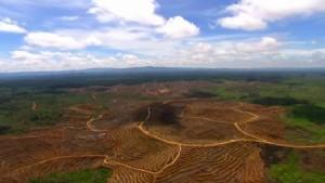 VICE_Deforestation-300x169