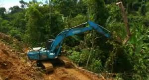 VICE_Deforesttion02-300x161